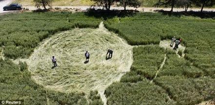 03 human made crop circle